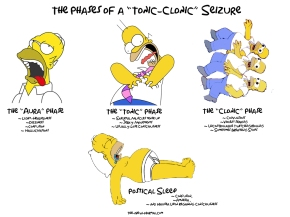 I created a little diagram to explain the phases of a Tonic-Clonic Seizure. Click the pic to enlarge.